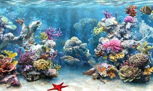 Аквариум прекрасное занятие для любителя тропических рыбок.